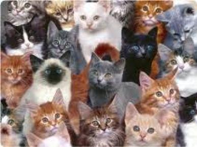 Farelerle baş edemeyen belediye 'Kedi Timi' kurdu