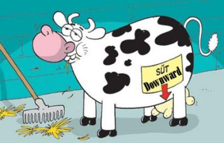 Süt projesinde Umarım Suç Öğretmene  Yüklenmez