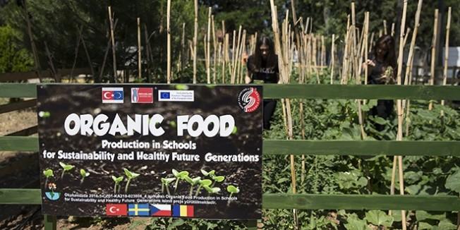 Okulda organik sebze yetiştiriyorlar