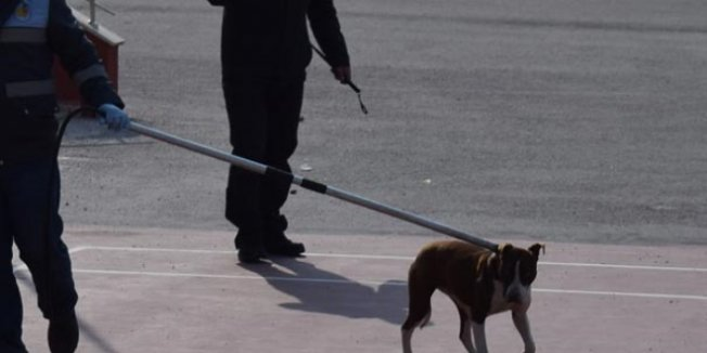 Okula giren pitbull öğrencilere saldırdı: 2 yaralı
