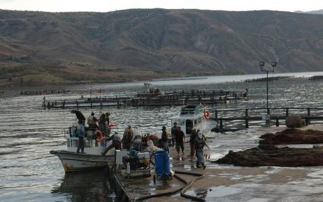 Baraj gölünde kurduğu kafeste alabalık üretimi yapıyor