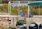 Dostluk Barajı köprüsüne Suriye mayını