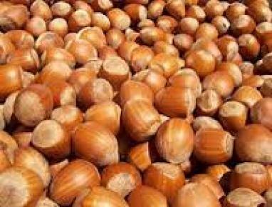 Fındık'ta aflatoksin uyarısı