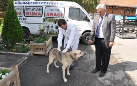Hayvanları Koruma Günü'nde hayvanlara ücretsiz kuduz aşısı