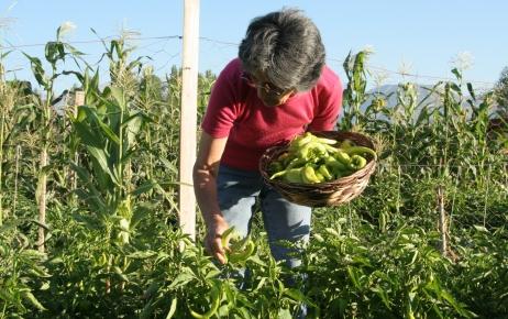 Hobi bahçelerinde ürün yetiştirip stres atıyorlar
