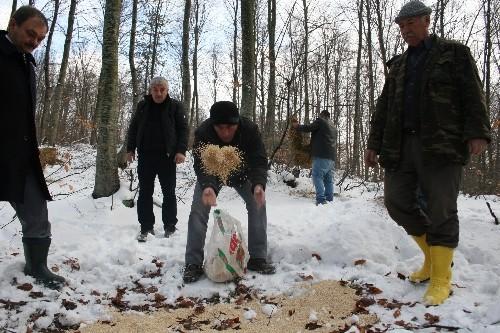 Kar altındaki Uludağ'da geyiklere yem bırakıldı