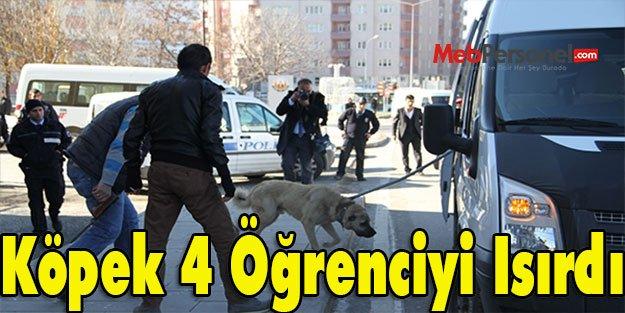Köpek 4 Öğrenciyi Isırdı