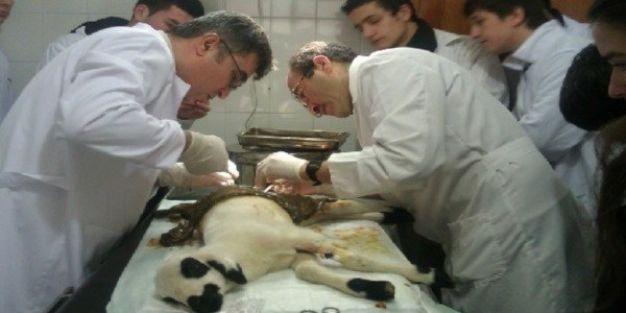 MEB'in ilk hayvan hastanesi açılıyor