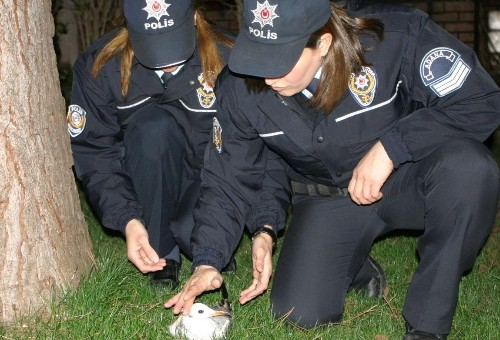 Polisler bu kez kanadı kırık martıyı kurtardı