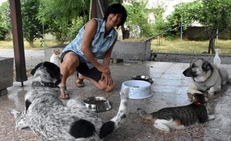 Emekli öğretmen, maaşını sokak hayvanları için harcıyor