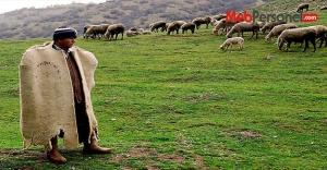 5 bin lira maaşla çoban aranıyor
